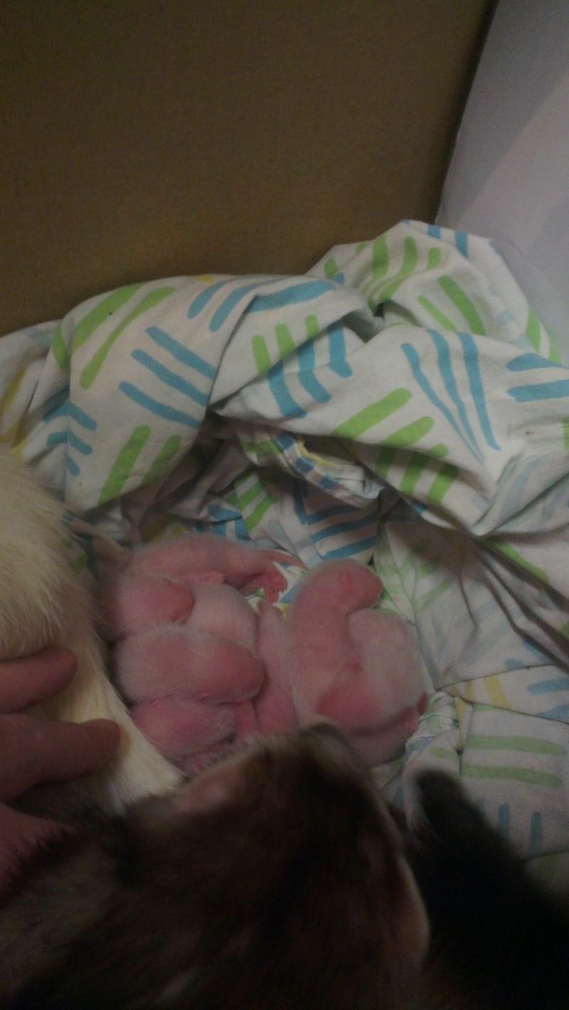 les bébés 2013 (euh... La seule et unique crevette pour l'instant!) Imag1512