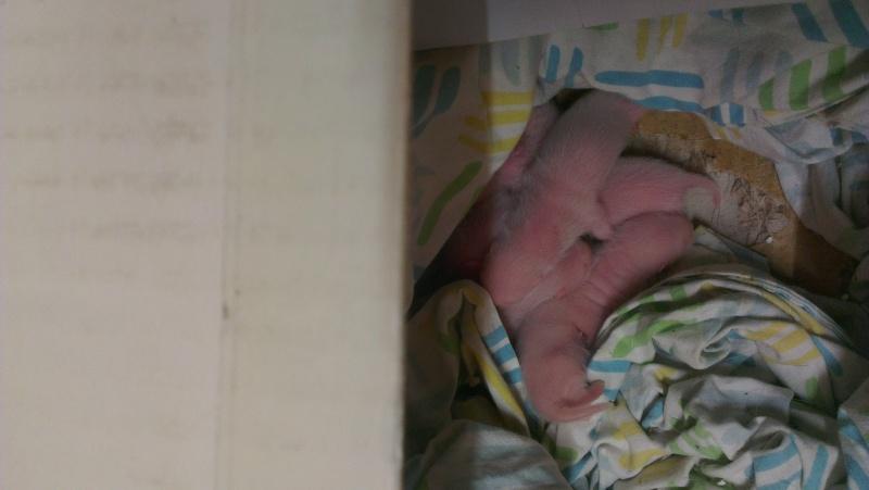 les bébés 2013 (euh... La seule et unique crevette pour l'instant!) Imag1515