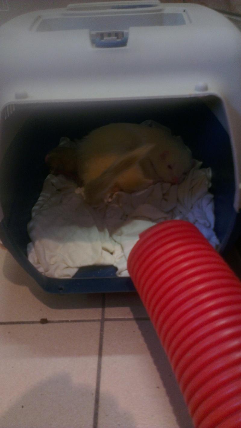 les bébés 2013 (euh... La seule et unique crevette pour l'instant!) Imag1810