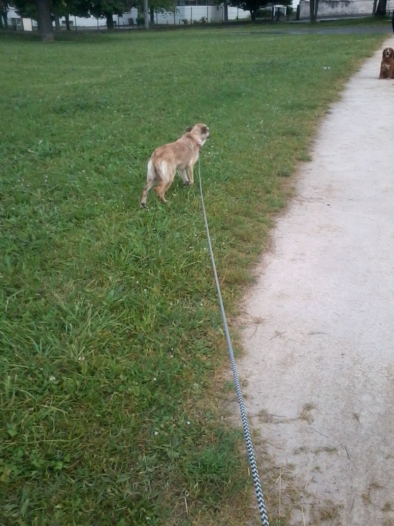 Joy ma petite chienne 2013-011