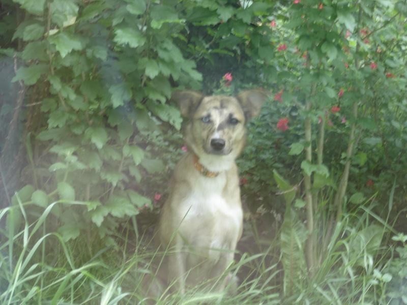 Joy ma petite chienne Dsc04114