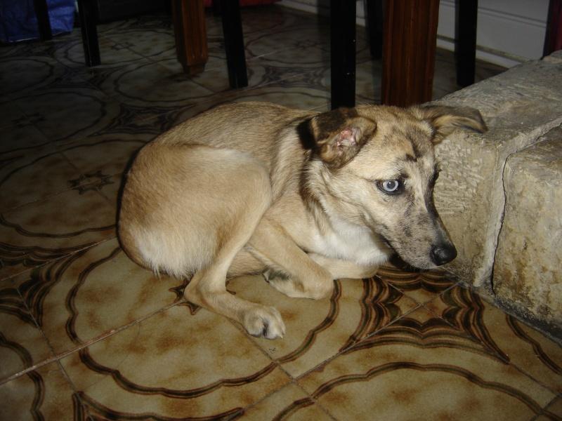 Joy ma petite chienne Dsc04210