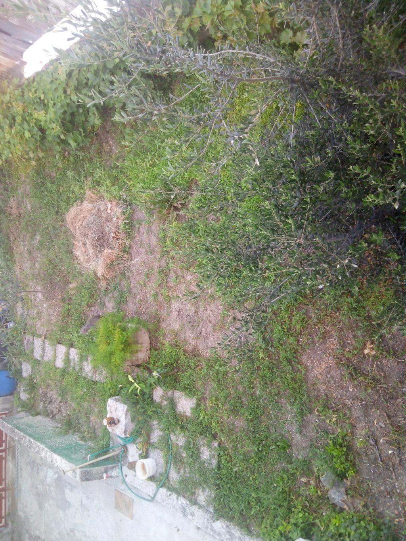 Napad u Supetru ipak navijacke prirode?!Jedan od napadnutih sezonaca strastveni zvezdas iz Vukovara 'Vukovar navija za Zvezdu' - Page 7 15605710