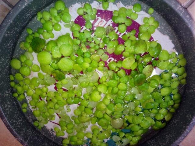 [Vends] Poissons et plantes [21,58, ENVOI] Mms_im10