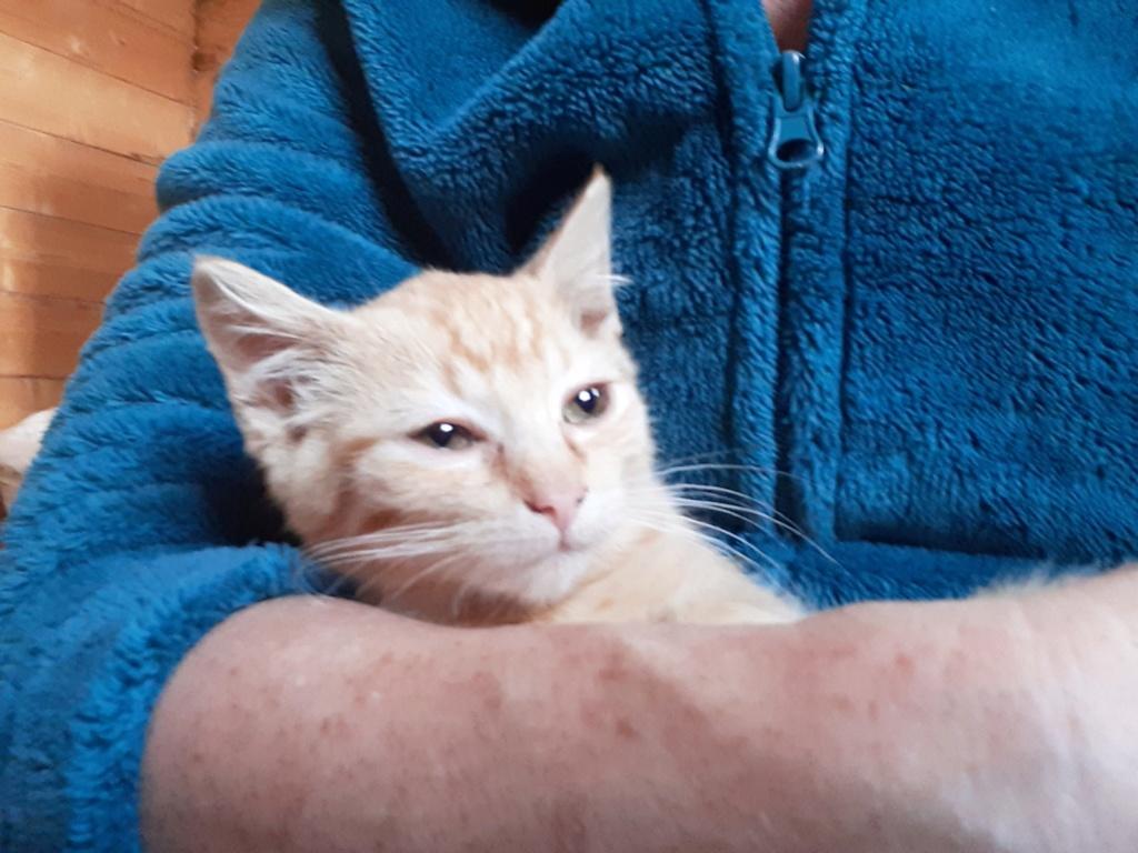Perle petite chatte rousse de 3 mois 20191019