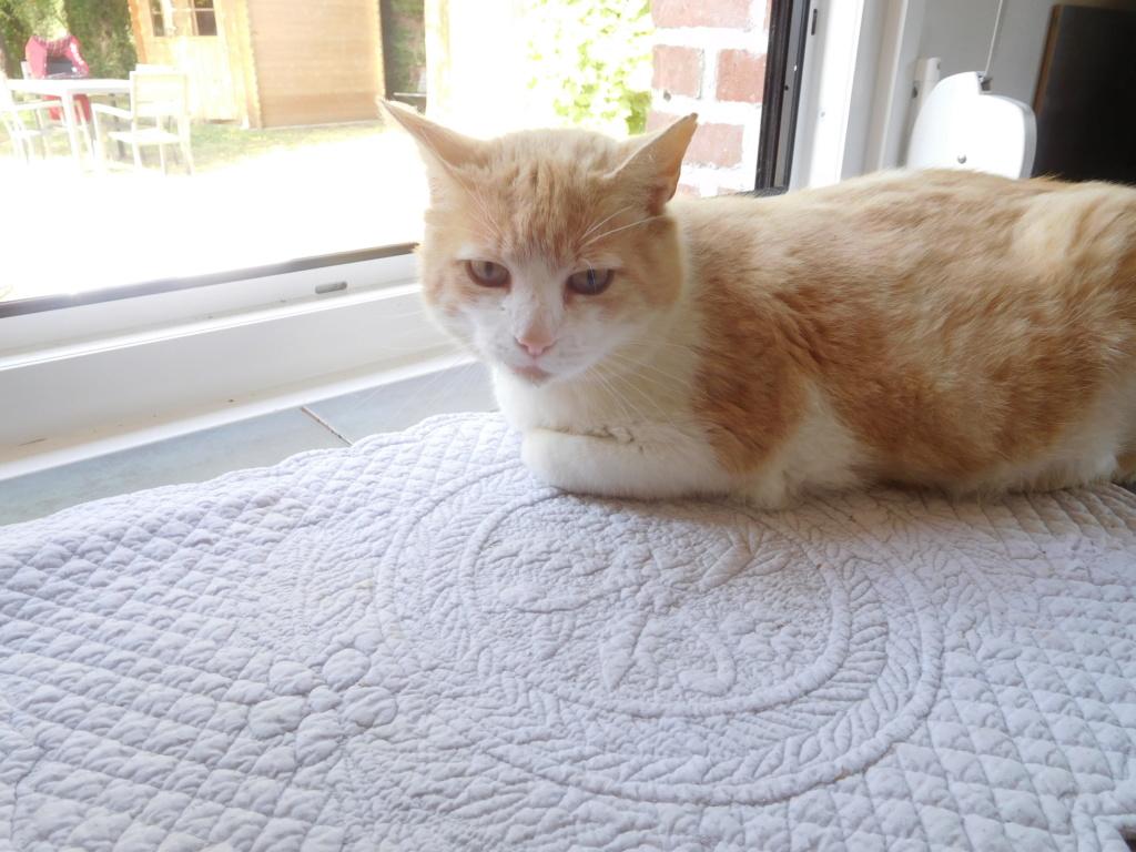 orion  2 beau chat roux et blanc(statut CHAT LIBRE) Dscn9010