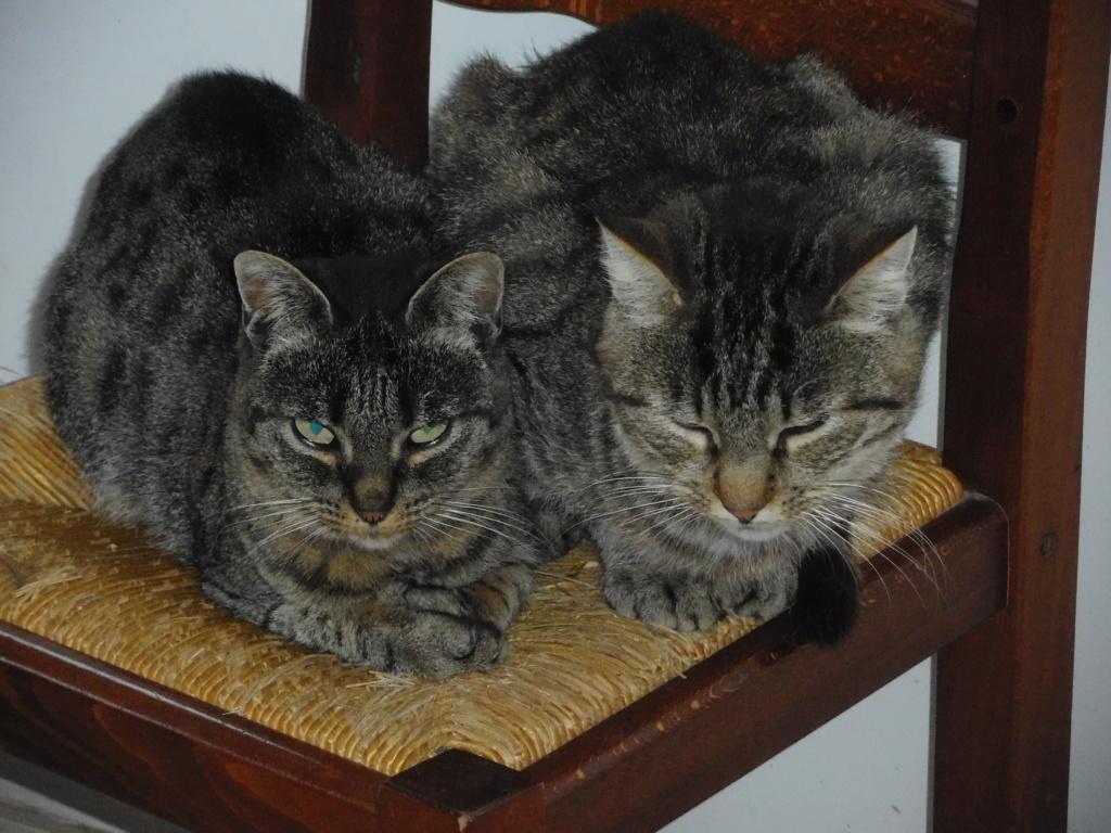 Jade chatte tigrée 1 an Dscn9212