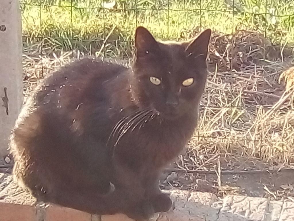 IRIS chatte noire née  01/01/2010 (disparue depuis le 15 janvier 2019) Img_2027