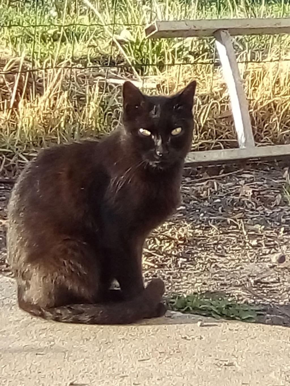 IRIS chatte noire née  01/01/2010 (disparue depuis le 15 janvier 2019) Img_2028