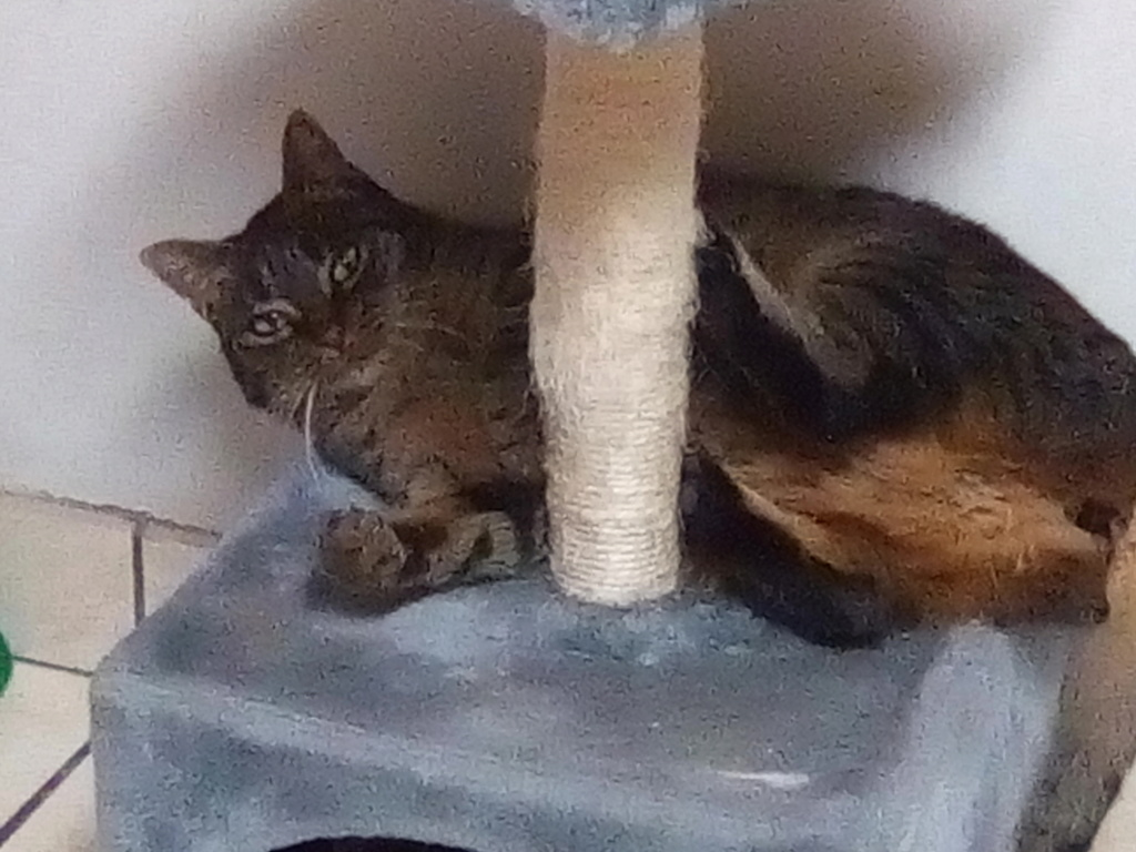 Jade chatte tigrée 1 an Img_2060