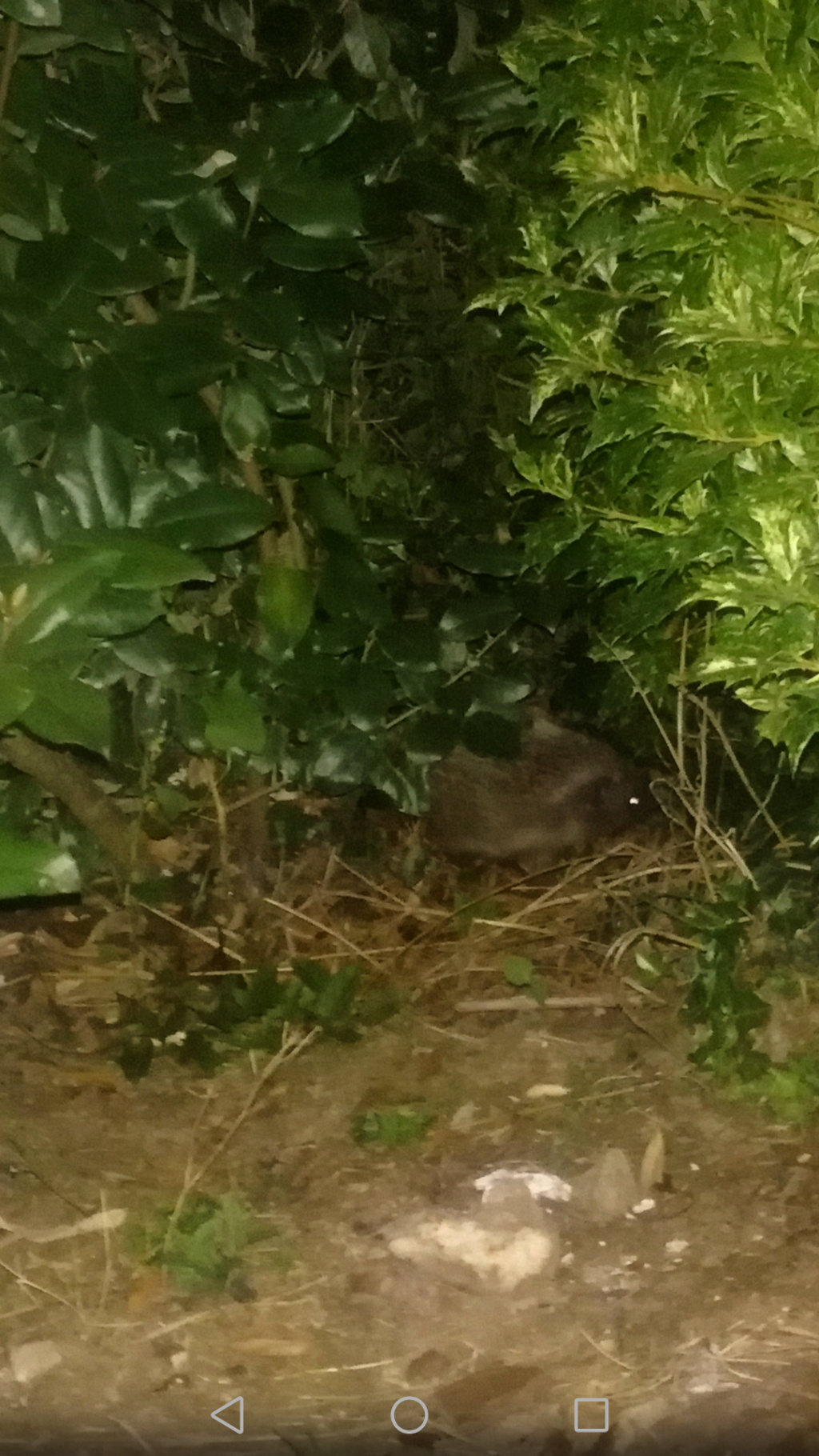 Clandestin dans mon jardin !! Screen13