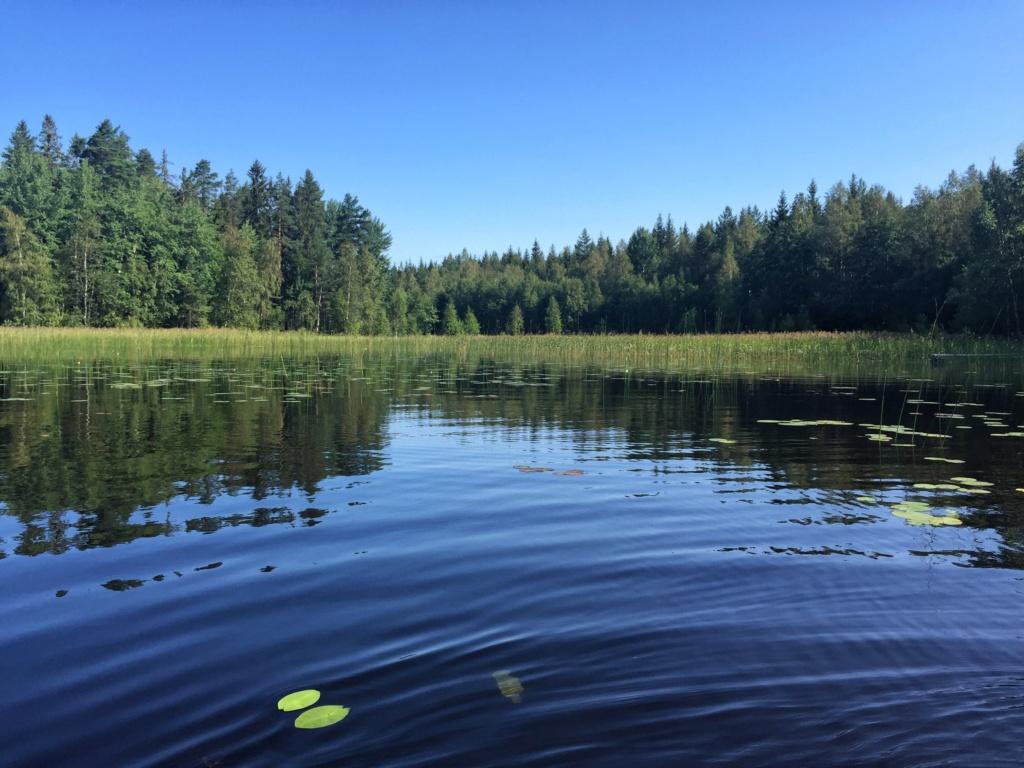 Le voilà- Suède 2019- un mois intense dans la nature Lapone Img_8912
