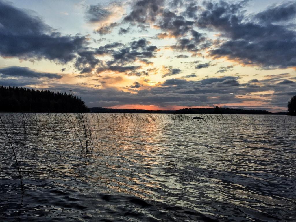 Le voilà- Suède 2019- un mois intense dans la nature Lapone Img_8918