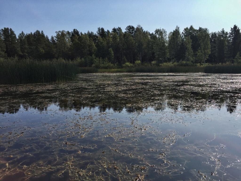 Le voilà- Suède 2019- un mois intense dans la nature Lapone Img_8924
