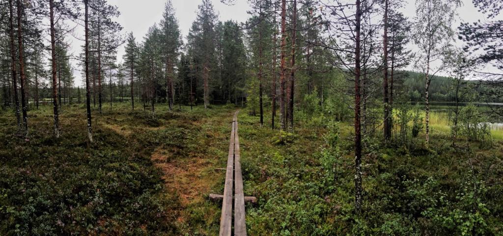 Le voilà- Suède 2019- un mois intense dans la nature Lapone Img_9313