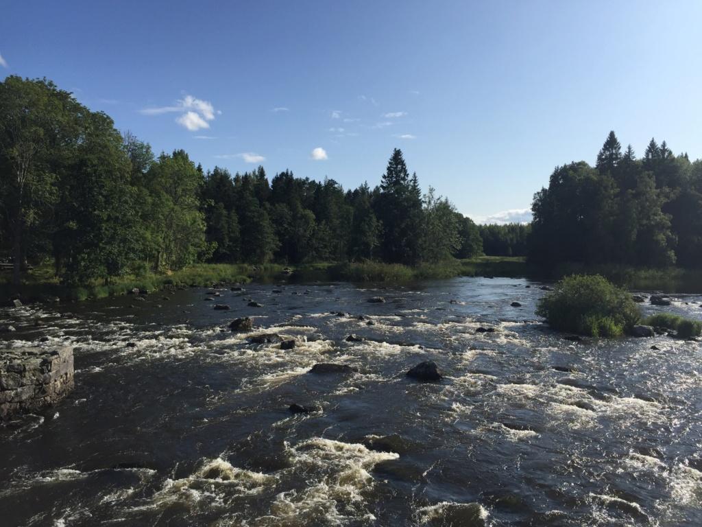 Le voilà- Suède 2019- un mois intense dans la nature Lapone Img_9322