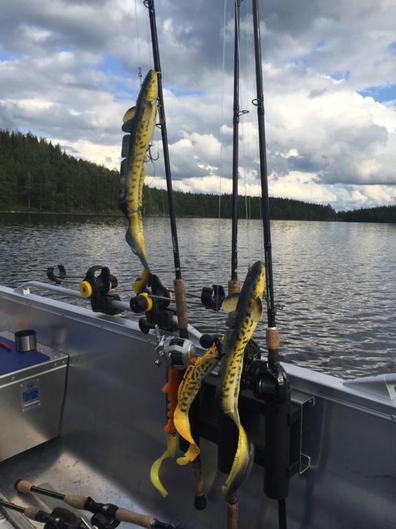Le voilà- Suède 2019- un mois intense dans la nature Lapone Img_9410