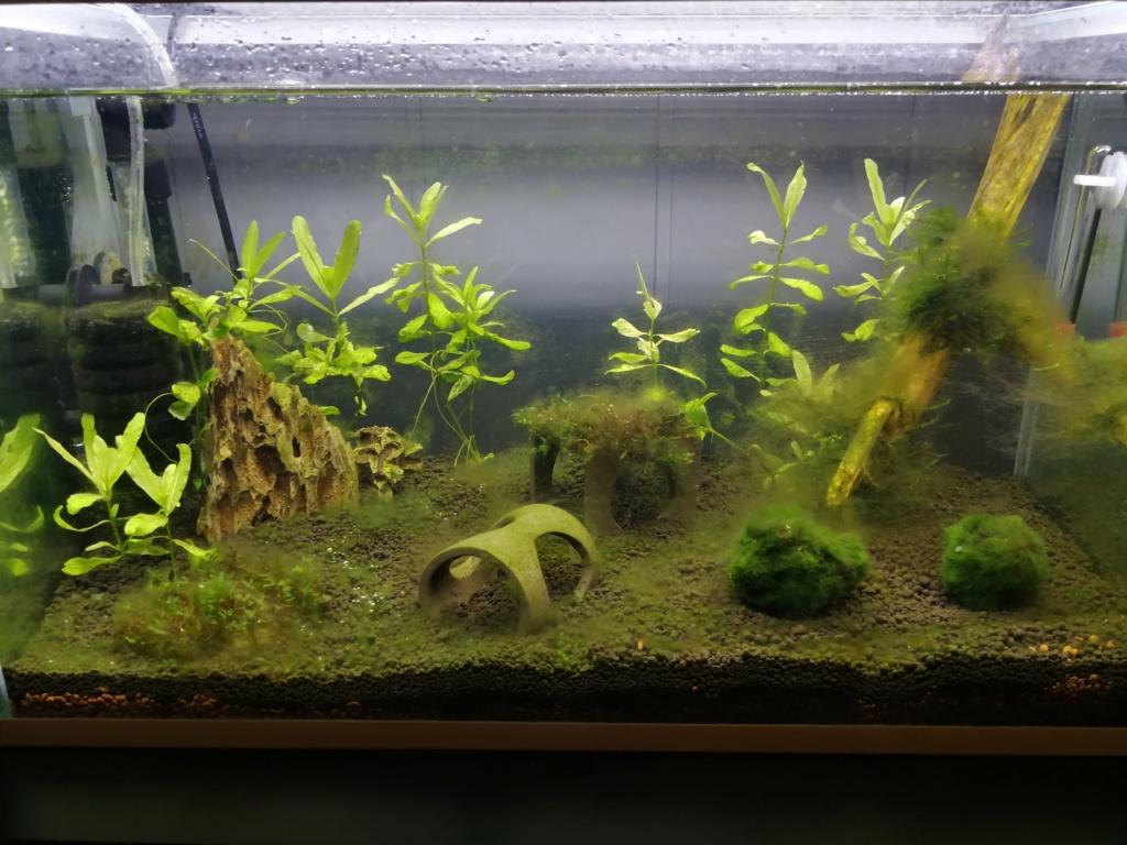 Bac 30L crevettes  Img_2011