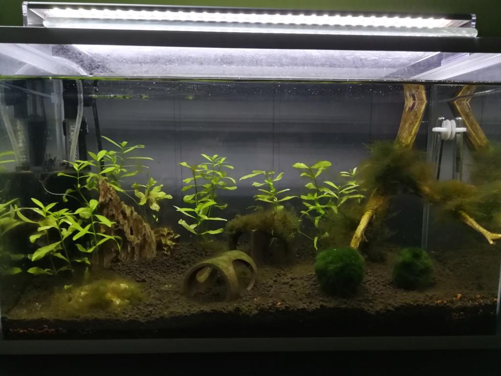 Bac 30L crevettes  Img_2012