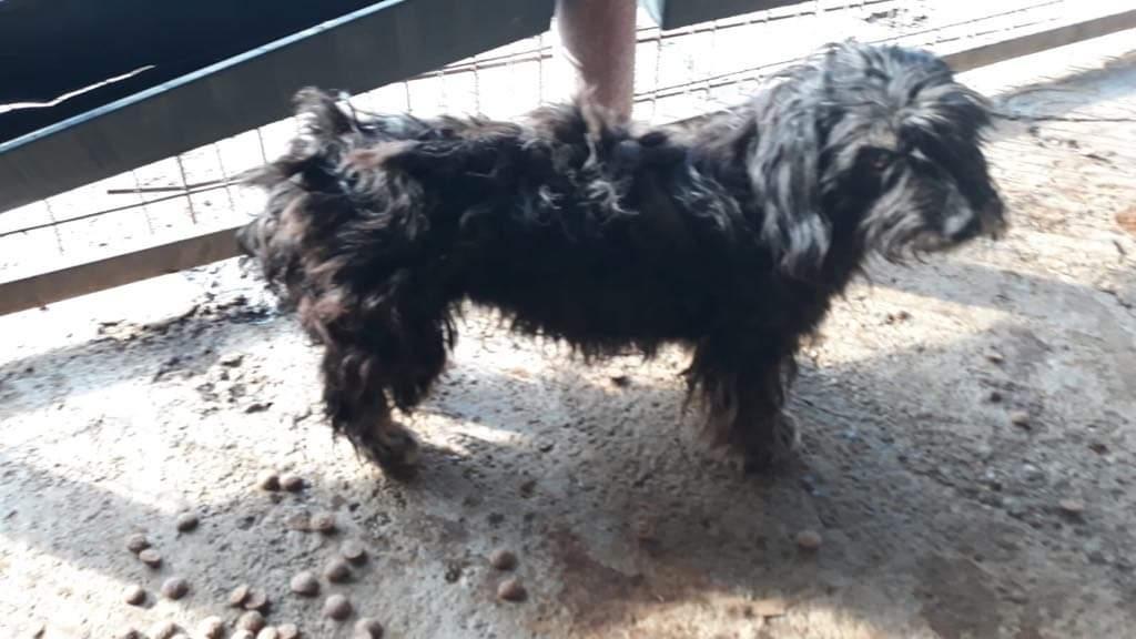 MACY gentille petite chienne en quête d'affection  -  prise en charge SPA PONTARLIER 419b4b10