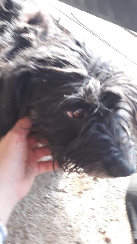MACY gentille petite chienne en quête d'affection  -  prise en charge SPA PONTARLIER Ace7fd10