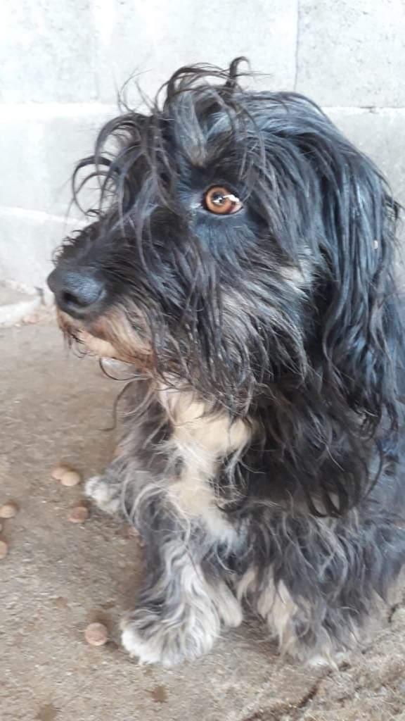 MACY gentille petite chienne en quête d'affection  -  prise en charge SPA PONTARLIER Bb8f2f10