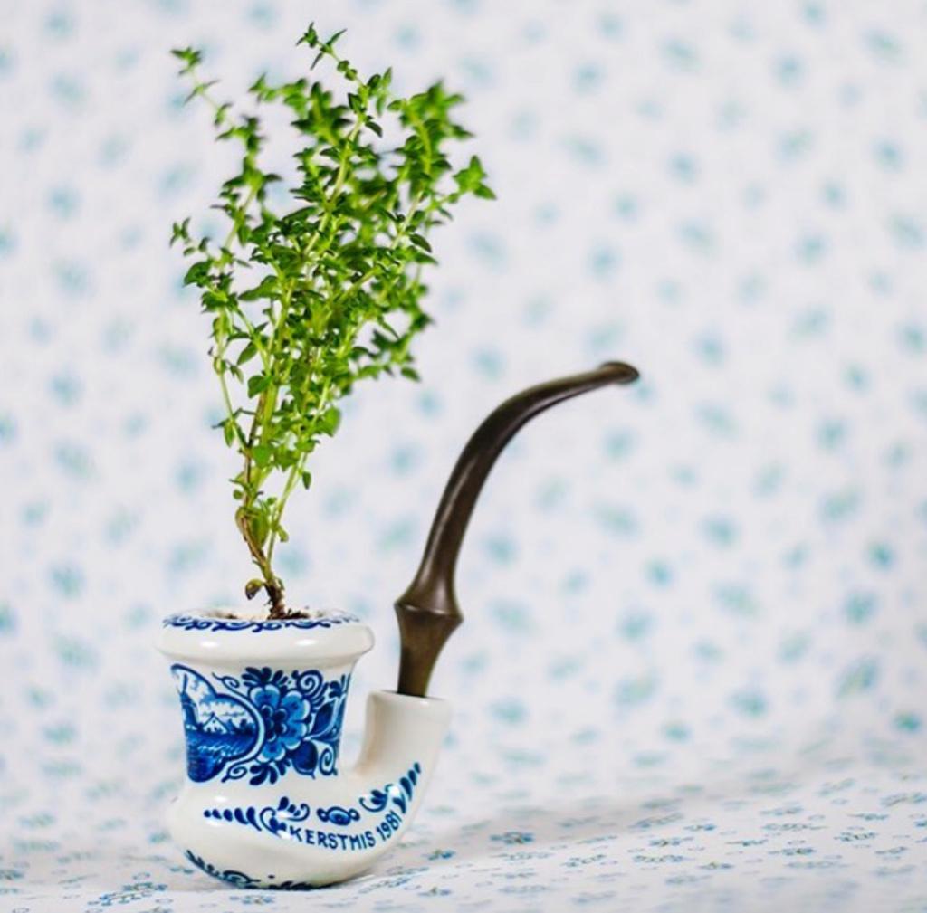Concept original de pot de fleur Img_2033