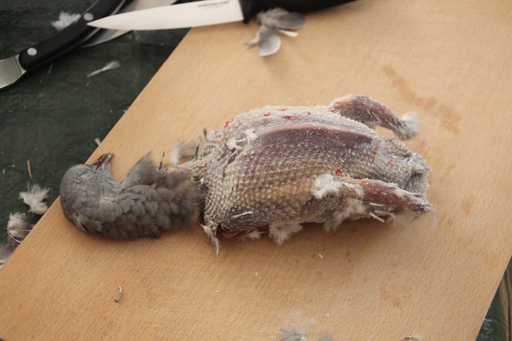 Préparer un pigeon :) 4_pige10