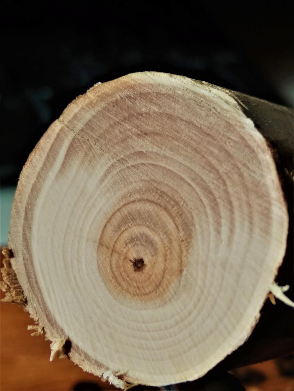 Listado maderas para arcos - Página 12 Texu110