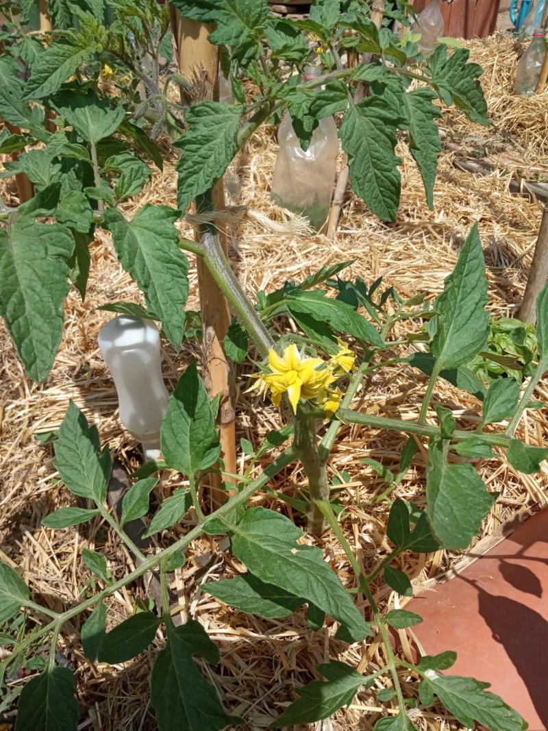 EL huerto con la plantación de verano Img_2138