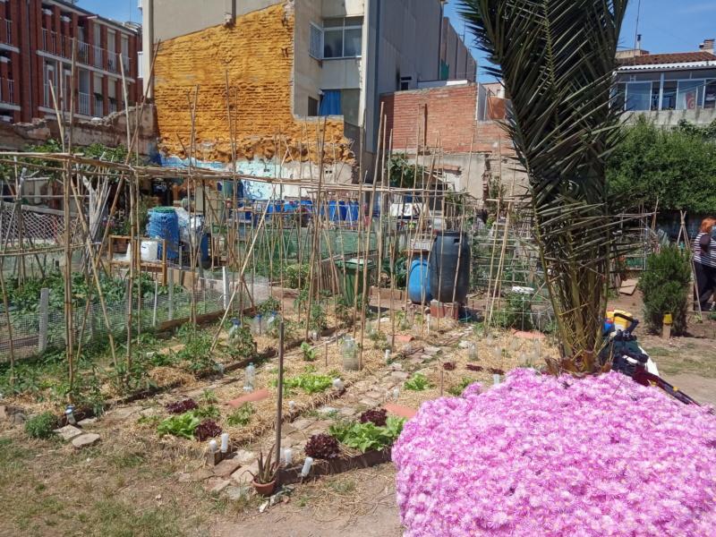 EL huerto con la plantación de verano Img_2139