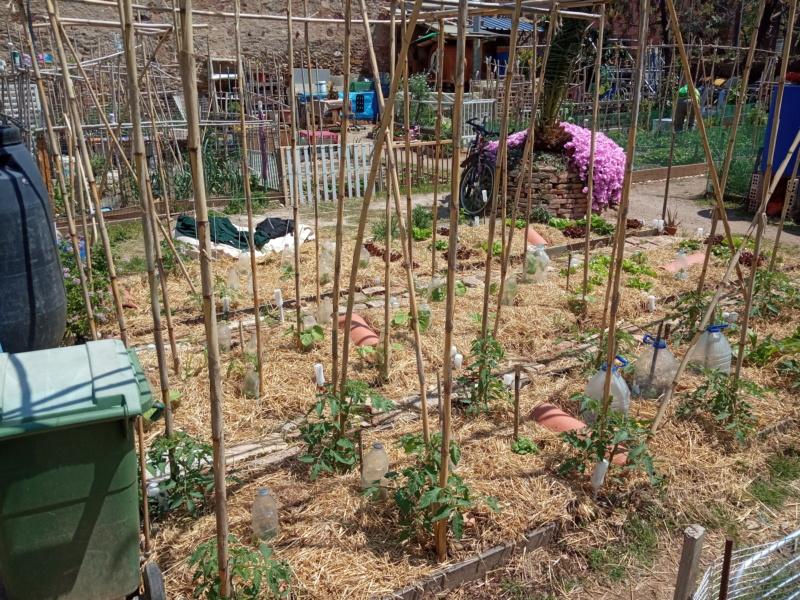 EL huerto con la plantación de verano Img_2140