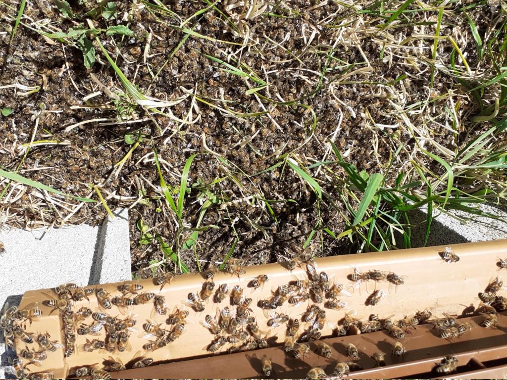 abeilles et produits phytos  - Page 8 20210510