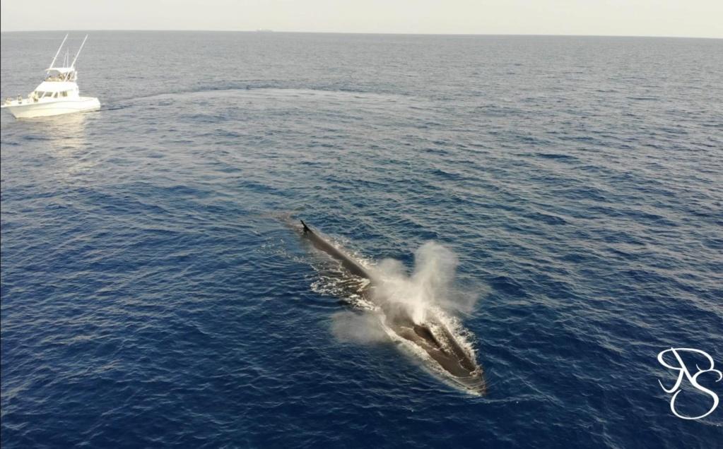 Envie de vous raconter mes petites anecdotes mediterranéennes Whale-10
