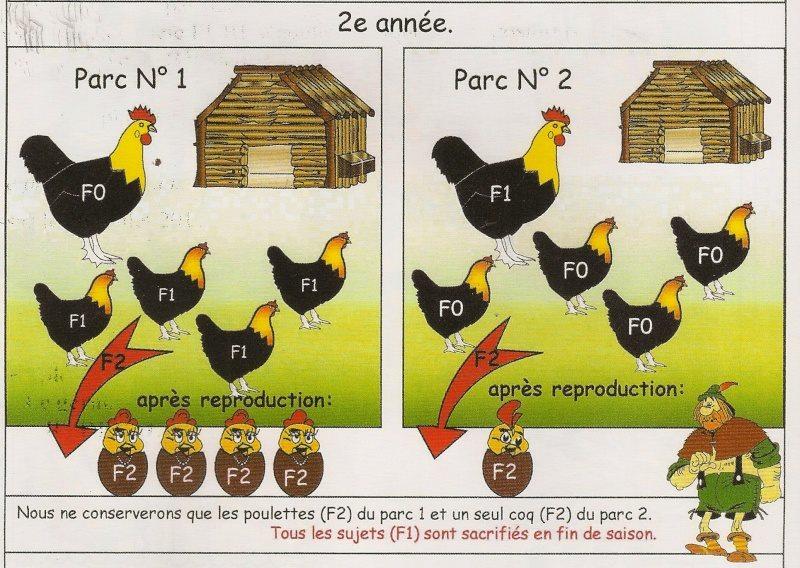 Méthode de reproduction en image A210