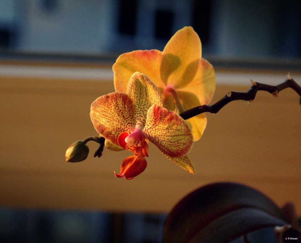 Orchideen 3 (fortlaufende Seiten 300 bis 400) - Seite 59 Dsc02213