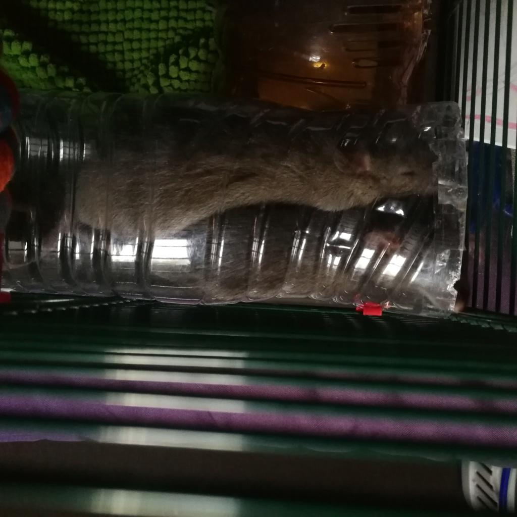 Mon gros et la crevette Img_2011