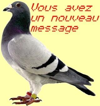 [Jeu] Association d'images - Page 37 Pigeon11