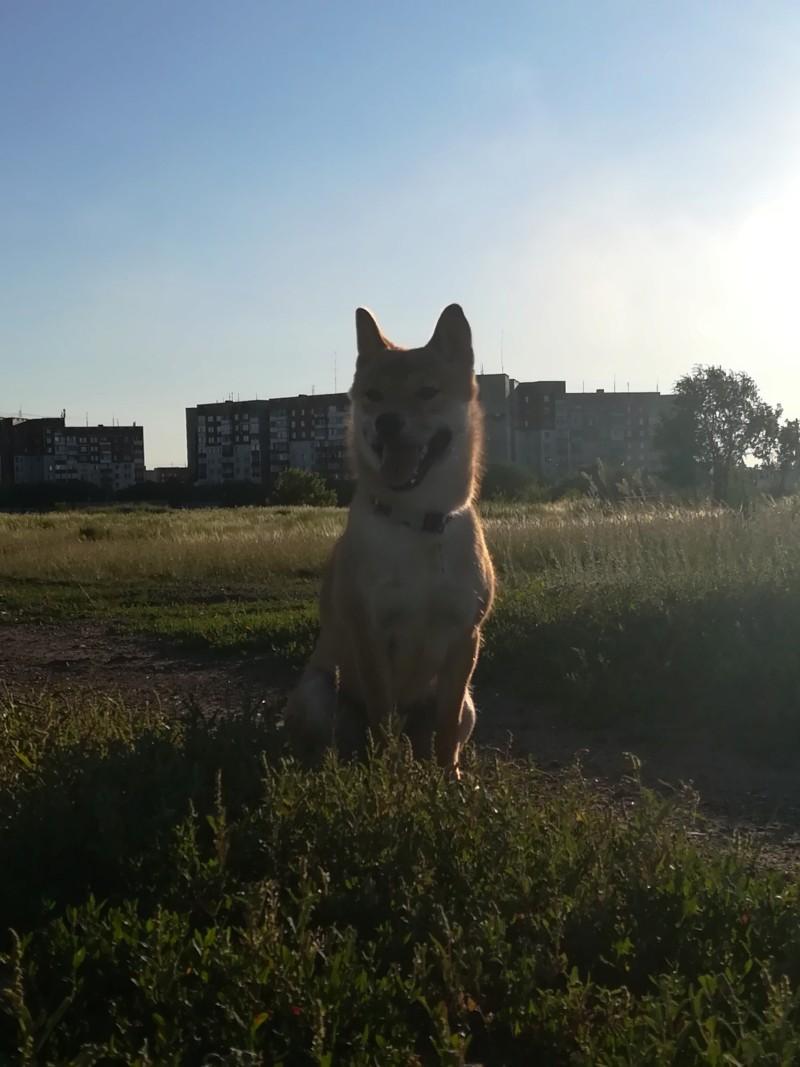 Течка и как облегчить себе жизнь и собаке 20180710