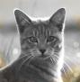 Katzen des vergessenen Tals - Portal Kdtfed12