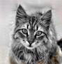 Katzen des vergessenen Tals - Portal Kdtstu10