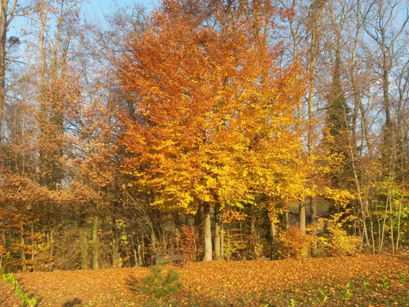 Couleurs d'automne Foret10