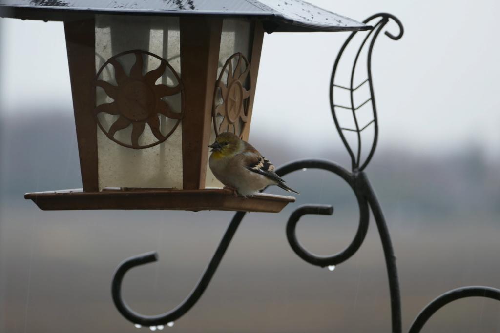 Quel est cet oiseau SVP? P1710711