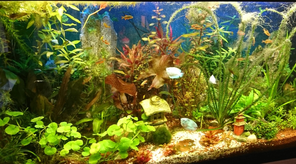 [donne] poissons tetra [12] Montag10