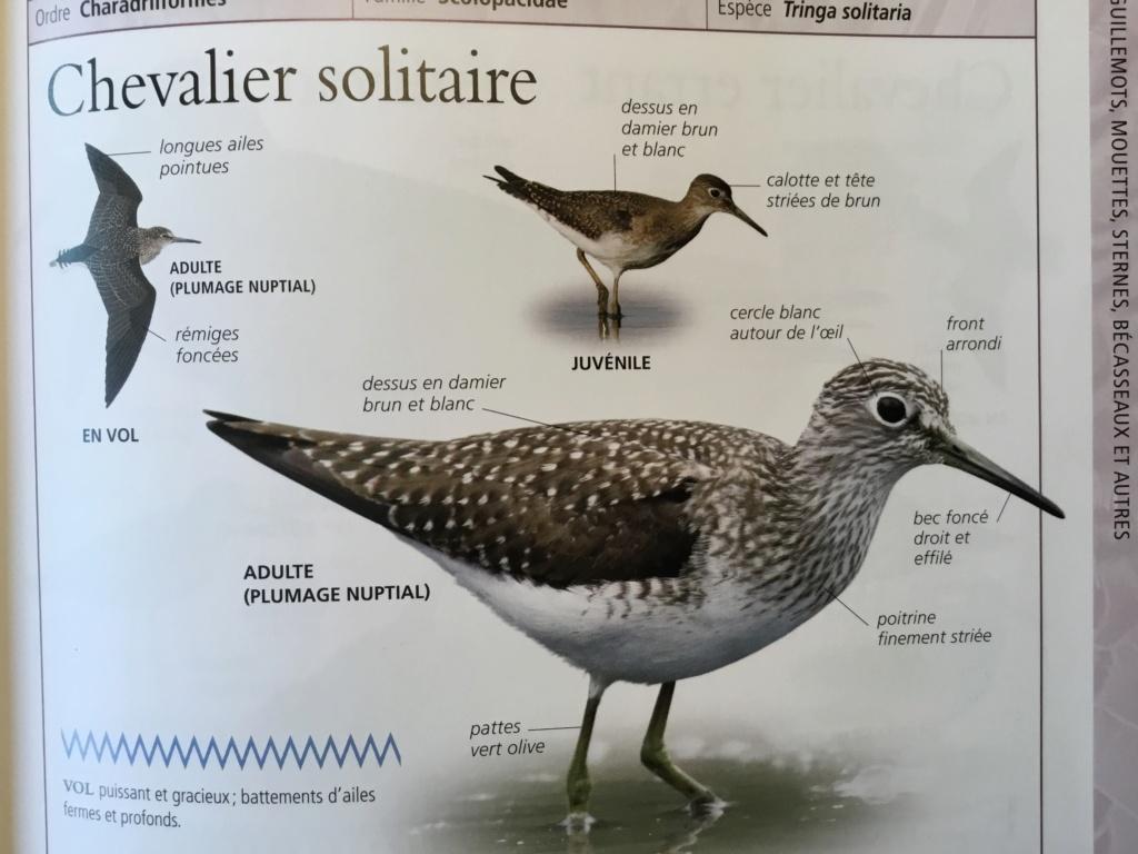Chevalier ... solitaire? 2d1e2110