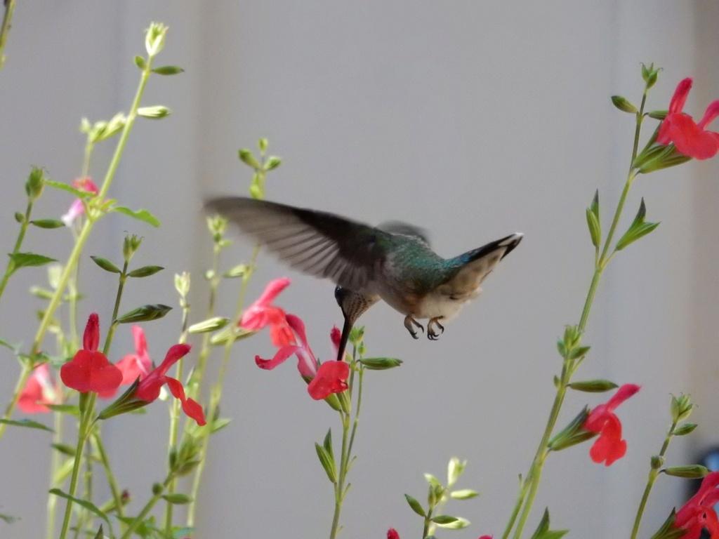 re-colibri... 4c36a910