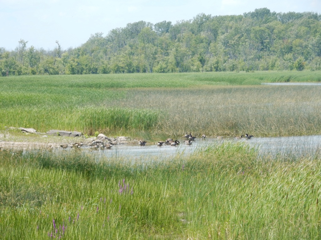 Bayou de l'isle Lamotte lac Champlain 95fb5d10