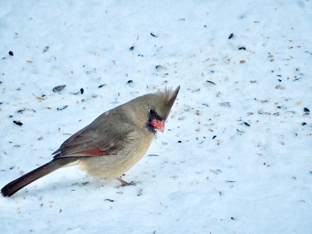 Cardinal A393df10