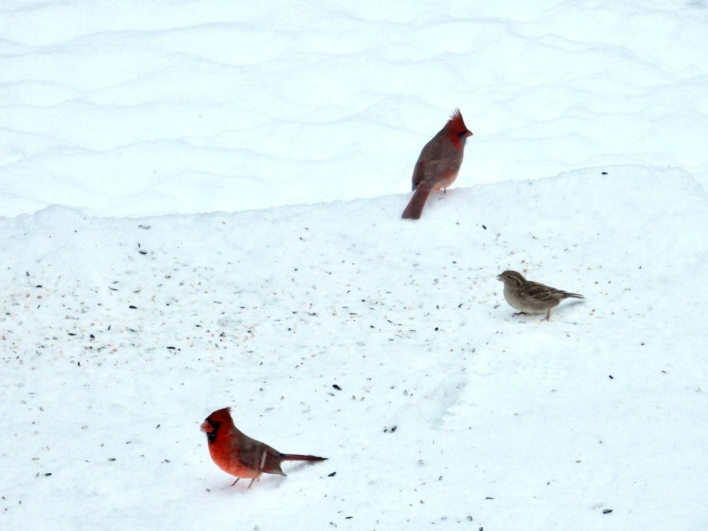 Cardinal A4ab2810