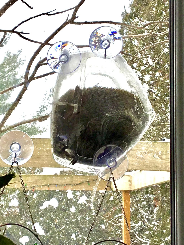 Mangeoire de fenêtre  C1d8bb10